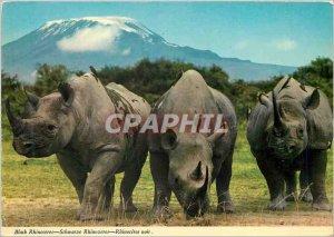 Postcard Modern Black Rhinoceros