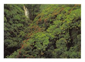 Tree Postcard , Nanue Falls with Tulip Trees & Royal Palms, Hawaii, USA U10