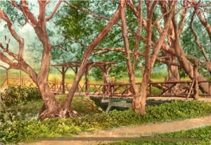 A Rustic Bridge Among The Oaks