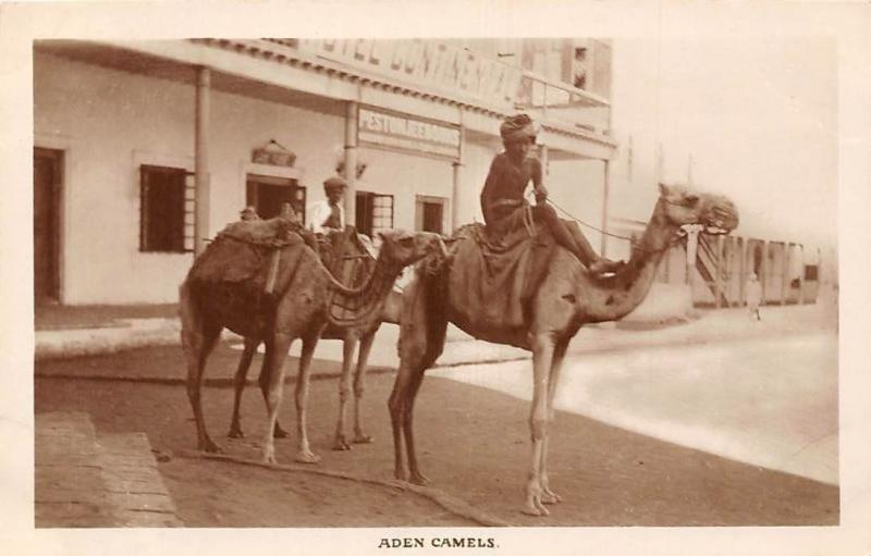 Yemen Aden Camels and Native People