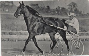 Horse UHLAN , World Trotting Record Race Horse , 30-40s