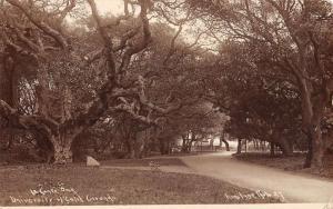 Oakland California University Grounds Real Photo Antique Postcard K15950