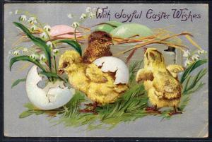 Easter Wishes Chicks BIN