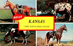 Kansas Hello From The Sunflower State With Horses