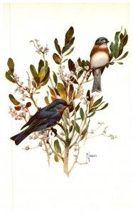Birds , Bluebird , artist signed