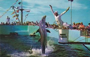 Florida Marineland Feeding Time Jumping Porpoise Marine Studios