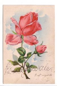 Rose with Glitter, Bridgewater  Nova Scotia, PFB
