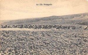 Elk Stampede Moose / Elk Unused