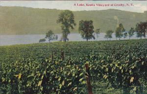 A Lake, Keuka Vineyard at Crosby, New York, PU-1914