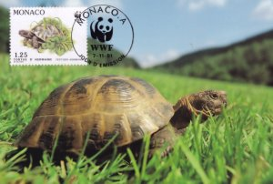 Hermanns Tortoise in French Grass Monaco WWF Stamp FDC Postcard