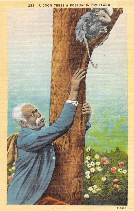 C25/ Black Americana Postcard A Coon Trees a Possum in Dixieland Man 19