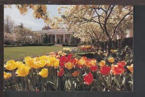 Rose Garden White House Washington DC Postcard BIN