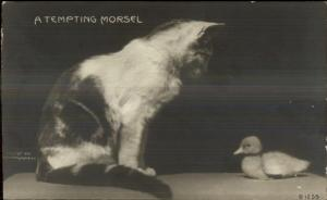 Rotograph Kitty Cat & Baby Chick c1905 Real Photo Postcard EXC COND