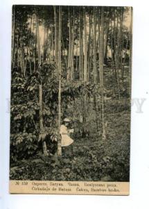 171147 Adjara Georgia BATUMI Chakva Bamboo grove Vintage PC