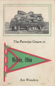 MELVIN , Ohio , 1914 ; Giant Parsnips