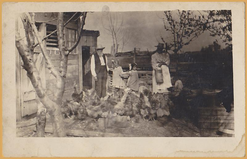 RPPC-Old farmer couple with kids feeding the chickens