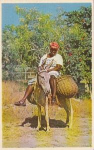 Jamaica Native Woman Riding Donkey Going To Market
