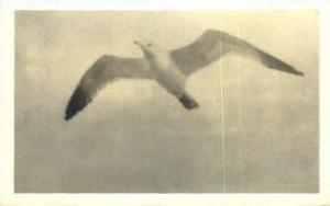 The Gull Misc ME 1925