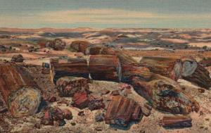 Petrified Forest, AZ, Cross Section of Petrified Logs, 1941 Linen Postcard g1537