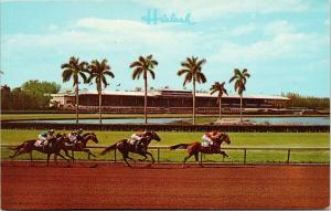 Hialeah Racecourse Miami Florida FL Horse Racing Unused Postcard F1