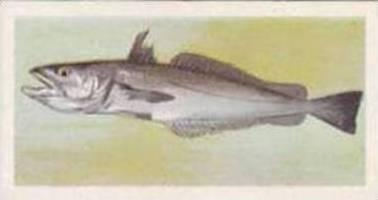 United Tobacco South Africa Vintage Trade Card African Fish 1937 No 4 Stockfish
