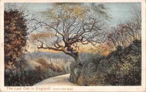 uk20513 last oak in england lands end road uk