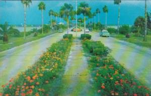 Florida Clearwater Flower Lined Causeway 1970