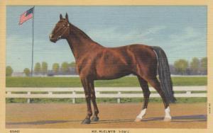 LEXINGTON , Kentucky, 1930-40s ; Harness Horse Mr. McELWYN 1:59 1/4