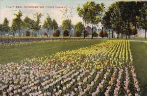 Illinois Chicago Tulip Bed In Washington Park 1909