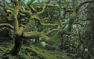 Old Oak Tree The Landslip Postcard