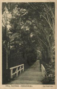 suriname, PARAMARIBO, Cultuurtuin, Gardens (1910s) Postcard