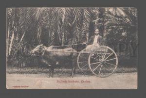 081498 Bullock hackery Ceylon & bearded driver Vintage PC