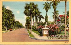 Florida Bradenton Beautiful Palm Lined Avenue 1955 Curteich