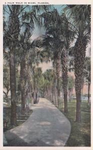 Florida Miami Beautiful Palm Walk
