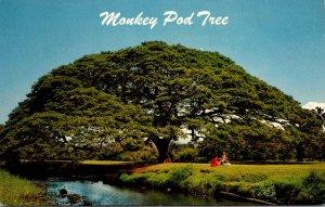 Hawaii Hawaiian Monkey Pod Tree 1968
