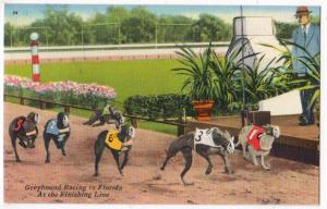 Greyhound Racing Fl