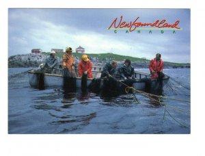 Hauling in Cod Fish, Greenpond, Newfoundland, Fishing, Large 5 X 7 Postcard