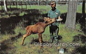 Calf Moose Fort William, Ontario, Canada Baby Bottle Unused