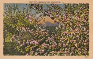 Apple Blossom Time Winchester Virginia