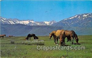 Spring Pasture  Postcards Post Cards Old Vintage Antique  Spring Pasture