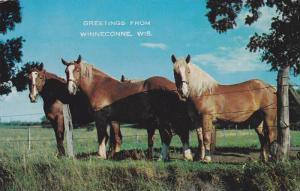 Horses, Greetings from Winneconne,  Wisconsin,  PU_1973