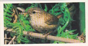 Brooke Bond Vintage Trade Card Woodland Wildlife 1980 No 37 Wren
