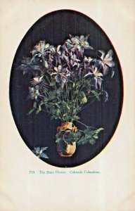 COLORADO STATE FLOWER COLUMBINE~THAYER #755 OVAL WINDOW POSTCARD