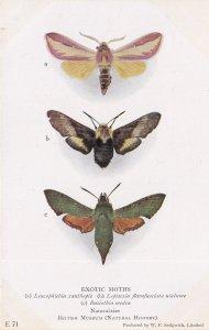 Basiothia Medea Sphingidae Exotic Moth Moths Antique Postcard