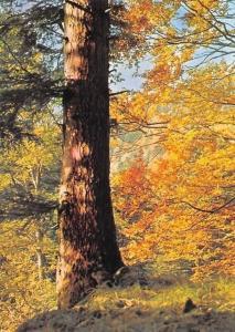 Herbstwald Foto: Heinz Schrempp, Autumn Forest Landscape