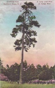 North Carolina Southern Pines Greetings From Southern Pines A Long Leaf Pine ...