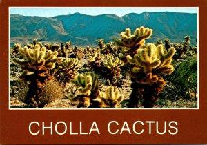 New Mexico Teddy Bear Cholla Cactus