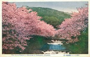 Japan The Cherry Blossoms at Karusu of Nakagawa Nagasaki 02.04