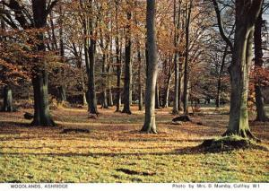 Woodlands Wood Forest Ashridge Hertfordshire Womens Institute Postcard