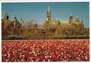 Canada Tulip Time Ottawa Ontario